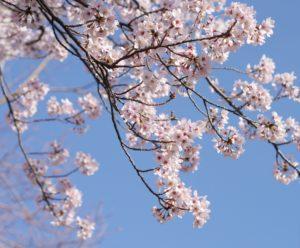 4月徳島の服装や気温